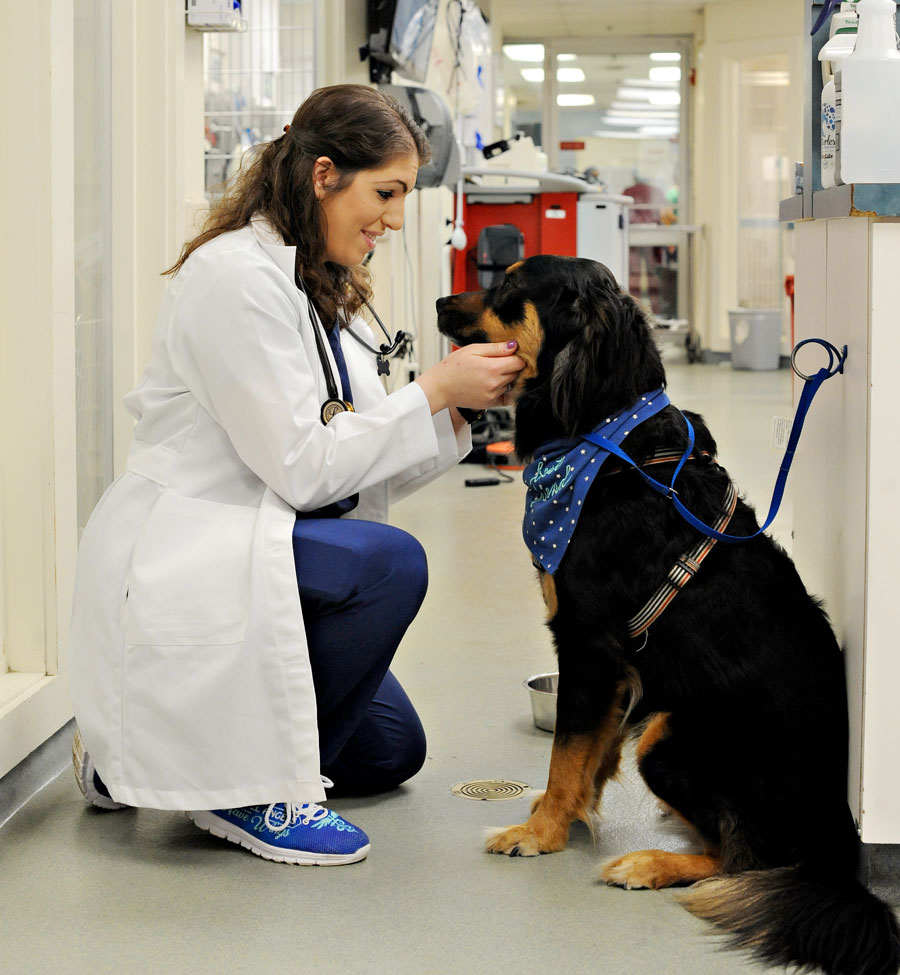 Veterinarian Alexis Nicole Zallas '13 on the job kneeling down in front of a dog wearing a scarf around it's neck
